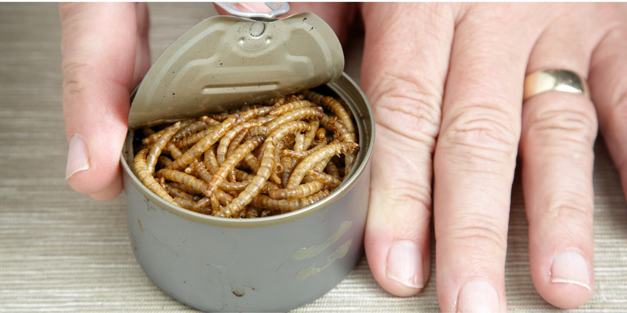 can of worms-1
